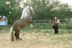 Vertigo en 2014 - l'énergie de nôtre propre corps se transmet au cheval et si nous sommes assez fiers intérieurement, il pourra se cabrer.